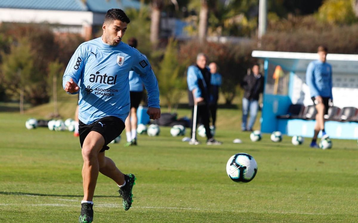 Luis Suárez in training for Uruguay