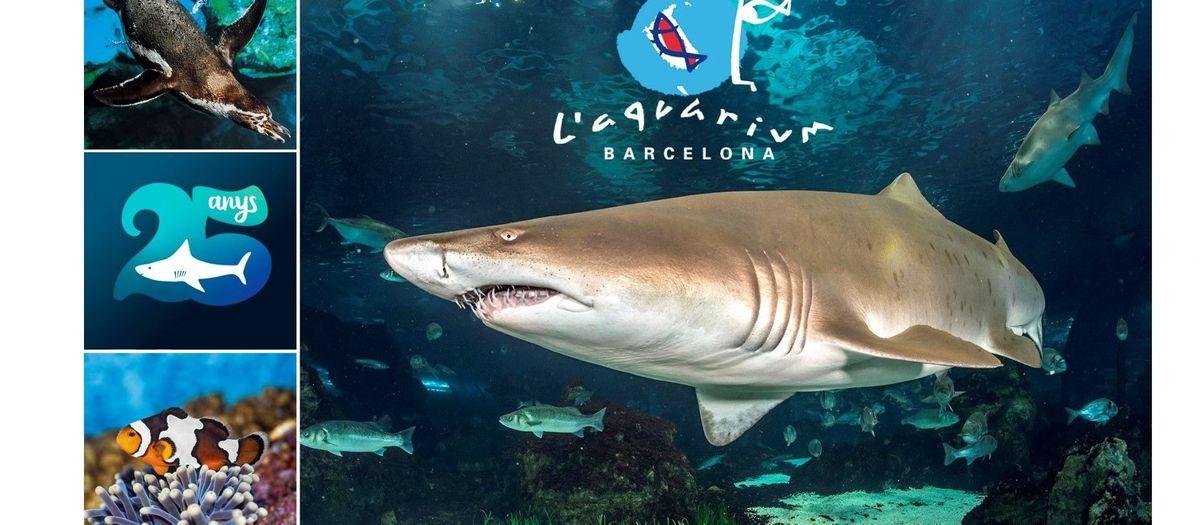 L'Aquàrium de Barcelona cumple 25 años y quiere celebrarlo con todos vosotros